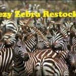 Yeezy 350 V2 Zebra Restock