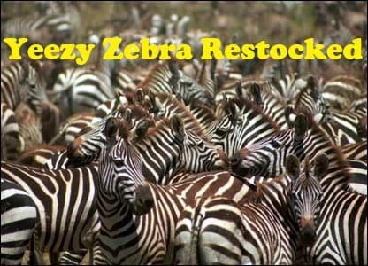 adidas Yeezy Boost 350 V2 Zebra Restock Release Date